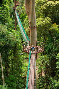 Young boy aged 7 (model released) exploring a canopy rope bridge walkway through the lowland dipterocarp rainforest in Borneo. Danum Valley Conservation Area, Sabah, Malaysia, July 2007  -  Tim Laman