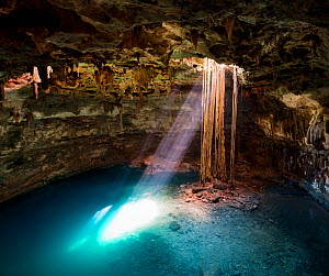 Cenote Samula (sink hole) with elongated roots of a Fig tree (Ficus sp) from ground level descending to the subterranian tourquoise coloured water below. Rays of sulight pass through the hole to illum...  -  Jack Dykinga