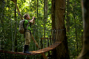 A young boy (model released) aged 9, crossing the suspension bridge over the river at the research station in Gunung Palung NP, Borneo. July  -  Tim Laman