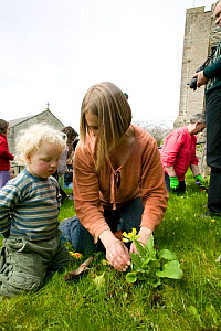 People of Henllan village 'Bee Friendly Project'  planting Cowslips (Primula Veris) in churchyard to attract wild and honey bees, organised by North Wales Wildlife Trust and Cadwyn Clwyd, Community Na...  -  David Woodfall