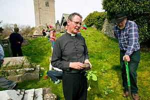 Vicar and people of Henllan village 'Bee Friendly Project'  planting Cowslips (Primula Veris) in churchyard to attract wild and honey bees, organised by North Wales Wildlife Trust and Cadwyn Clwyd, Co...  -  David Woodfall