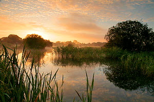 Sunrise over freshwater lake, once an old site for commercial peat extraction, near Westhay, Somerset Levels, part of the Avalon Marshes system of nature reserves, England, UK July 2009  -  John Waters