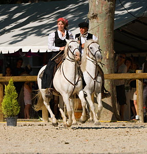 Two Gardians (Traditional French cowboys) ride their Camargue horses (Equus caballus) during the transhumance, in Tarascon, Camargue, Provence, France. June 2008 - Kristel Richard