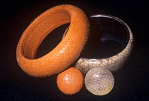 Snake-skin bracelets and earrings, man's misuse of animals, made in the Philippines.  -  Visuals Unlimited