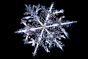 Snowflake. LM - Visuals Unlimited