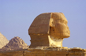 The Sphinx at Giza, Cairo, Egypt - Visuals Unlimited