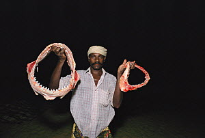 Man holds out Shark jaws, to be sold as trinkets, Thoothoor, India. - Jeff Rotman