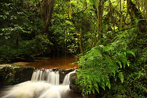 Cascades on stream in rainforest at 950 metres, Ranomafana National Park, Madagascar  -  Alan Watson
