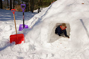 Boy (five years) playing in snow fort / cave in garden in winter, Lexington, Massachusetts, USA. December 2005, Model released  -  Tim Laman