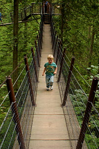 Boy (five years) running along canopy walkway through temperate rainforest, Capilano Park, Vancouver, British Columbia, Canada, August 2005, Model released  -  Tim Laman