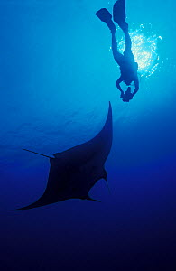 Manta Ray (Manta birostris) and scuba diver. Baja, Mexico, eastern tropical Pacific Ocean.  -  Brandon Cole