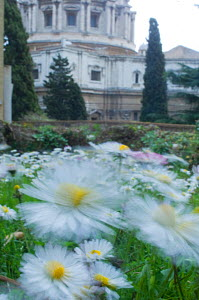 Common daisies (Bellis perennis) flowering in the  Vatican garden with St Peter's in the background, Rome, Italy, March 2010 - Wild Wonders of Europe / Geslin