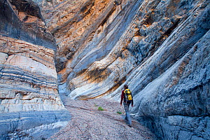 A hiker walking through impressive structures found in Death Valley's Fall canyon, California, USA, January 2010.  -  Floris van Breugel