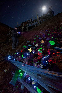 A rock collector explores piles of fluorescent minerals found in the tailings of the Pacific Tungsten Mine near Darwin, California. The bright colours are caused by fluorescence excited by a shortwave...  -  Floris van Breugel