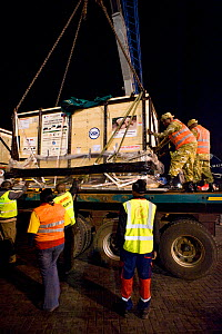 Northern white rhinoceros (Ceratotherium simum cottoni) in crate being offloaded in Kenya after flight from Prague to Nairobi, December 2009. Subspecies extinct in the wild, only eight left in captivi... - Mark Carwardine