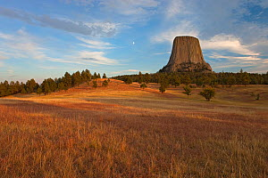 Distant view of Devil's Tower National Monument showing famous basalt tower at sunset. This is a sacred site for Native Americans, Wyoming, USA  -  Ingo Arndt