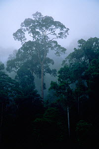 Lowland dipterocarp rainforest and river in Danum Valley Conservation Area, Sabah, Borneo, Malaysia,  -  Tim Laman