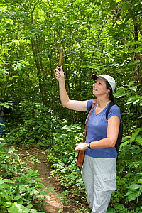 Conservation biologist and founder of the Proyecto Titi conservation programme Anne Savage radio tracking Cotton-top tamarins (Saguinus oedipus) in dry tropical forest of Colombia, South America IUCN...  -  Lisa Hoffner