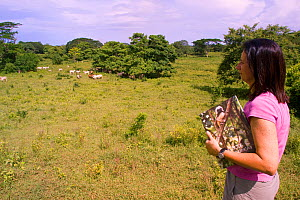 Conservation biologist and founder of the Proyecto Titi conservation programme Anne Savage looking over cattle pasture, which was once prime Cotton-top tamarin habitat. Colombia. South America. July 2...  -  Lisa Hoffner