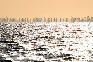 Fleet in distance during Round the Island Race, Isle of Wight, England, June 2010.  -  Rick Tomlinson