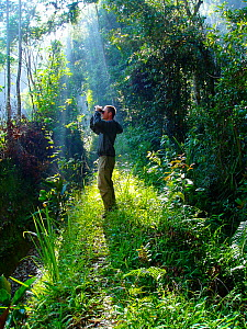 Jeff Wilson searching for Birds of Paradise, tropical rainforest, Papua New Guinea. For BBC Planet Earth, Jungles episode, 2005  -  Jeff Wilson