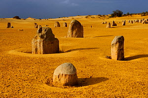 Limestone formations in the Pinnacles desert, Nambung National park, Western Australia. July 2009  -  Jouan & Rius