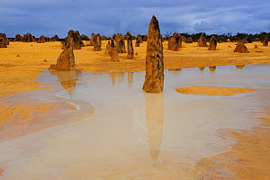 View of Pinnacles desert after heavy rainfall, Nambung National Park, Western Australia. August 2009  -  Jouan & Rius