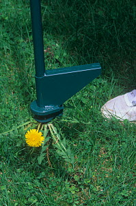 Device designed to remove Dandelions from lawns.  -  Visuals Unlimited