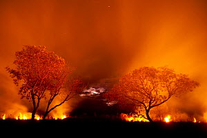 Grass fire at night in Pantanal, Brazil. WINNER: Eric Hosking Award portfolio image 5/6 - Wildlife Photographer of the Year 2010  -  Bence Mate