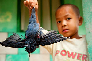Boy proudly holding dying Blue whistling thrush (Myophonus caeruleus) that he has shot with a catapult, Cherrapunjee, Meghalaya, North East India. HIGHLY COMMENDED: One Earth Award - Wildlife Photogra...  -  Sandesh Kadur