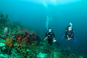 Two divers, at coral reef Blackjack Hole dive site off Speyside on the island of Tobago, Caribbean. March 2008 modelreleased Model released  -  Michele Westmorland