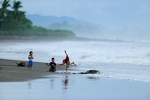 Children playing on the beach at Ostional, Pacific coast of Costa Rica, beside female Olive ridley sea turtles (Lepidochelys olivaceamaking their way to and from the beach to lay their eggs, November...  -  Solvin Zankl