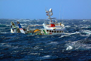 "Fishing vessel ""Ocean Harvest"" in huge waves on the North Sea, September 2010. Property released. - Philip Stephen"