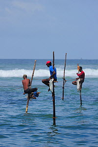 Traditional fishermen of Weligama, seated on long poles, fishing with rods, Sri Lanka, June 2010  -  Fabio Liverani