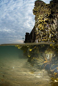 Split-level image of Seaweed growth on a groyne, Abersoch, Wales, April 2010 - Graham Eaton