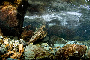 An underwater view of a mountain stream showing internal reflections on the water surface, Snowdonia NP, Gwynedd, Wales, UK, December 2009.  -  Graham Eaton