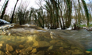 A split-level view of a fast flowing limestone stream in a woodland valley, River Aly, Clwyd, Wales, UK. December 2009.  -  Graham Eaton