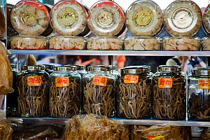 Jars full of dried Seahorse (Hippocampus) for sale at medicine shop in Guangzhou, China. Seahorses are dried for use as aphrodisiacs in Chinese medicine. - David Fleetham