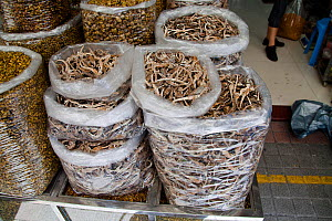 Bags full of dried Seahorse (Hippocampus) for sale at a medicine shop in Guangzhou, China. Seahorses are dried for use as aphrodisiacs in Chinese medicine. - David Fleetham