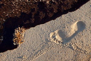 Human footprint and oiled beach from the BP Deepwater Horizon oil leak in the Gulf of Mexico. Baldwin County, Alabama. USA, June 2010.  -  Gerrit Vyn