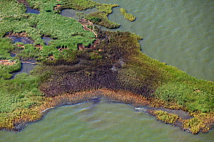 Aerial view of an oil covered island and displaced oil containment boom in the Barataria Bay area of the Mississippi River delta, contaminated as a result of the BP Deepwater Horizon oil leak in the G... - Gerrit Vyn