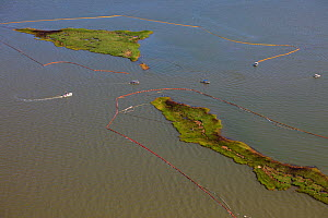 Aerial view of oiled bird nesting colonies in Barataria Bay area of the Mississippi River delta, with oil spill containment booms attempting to prevent more oil coming ashore. These waters are contami...  -  Gerrit Vyn