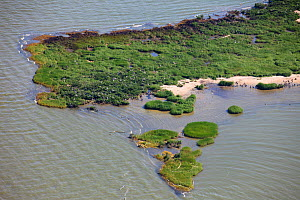 Aerial view of oiled bird nesting colonies in Barataria Bay area of the Mississippi River delta, contaminated by oil from the BP Deepwater Horizon leak in the Gulf of Mexico. Plaquemines Parish, Louis...  -  Gerrit Vyn