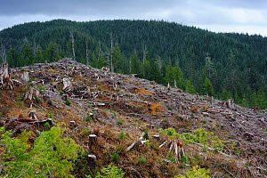 Clearing / timber removal  in the Olympic National Forest, Washington, USA, March 2010  -  Gerrit Vyn