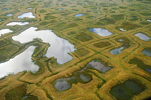 Aerial view of tundra ponds and polygon formations in the NPRA. Arctic Coastal Plain, Alaska. July.  -  Gerrit Vyn