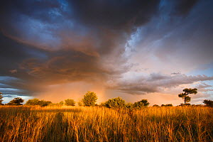 Clouds during the rainy season in the Kalahari Desert, Botswana, March 2009 - Christophe Courteau