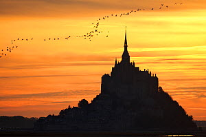 Silhouette of Mont Saint Michel at sunset with birds flying over, Normandy, France, October 2007 - Christophe Courteau