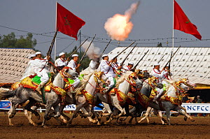 Traditionally dressed Berber warriors, mounted on Barb and Arab Barb horses, gallop in formation firing their guns during the Fantasia in Dar Es Salam, Morocco, June 2010  -  Kristel Richard