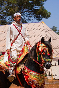 A tradionally dressed Berber warrior riding his Arab Barb stallion during the Fantasia, in Dar Es Salam, Morocco, June 2010  -  Kristel Richard