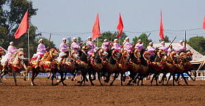 Traditionally dressed Berber warriors, mounted on Barb and Arab Barb horses, galloping in formation with guns raised during the Fantasia in Dar Es Salam, Morocco, June 2010 - Kristel Richard